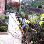 Revamped herbaceous borders.  Using flowering shrubs with winter form and interest, an all year round garden is created.