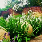 Agapanthus 'Arctic White' pushing between lime stone spheres on a south facing terrace.